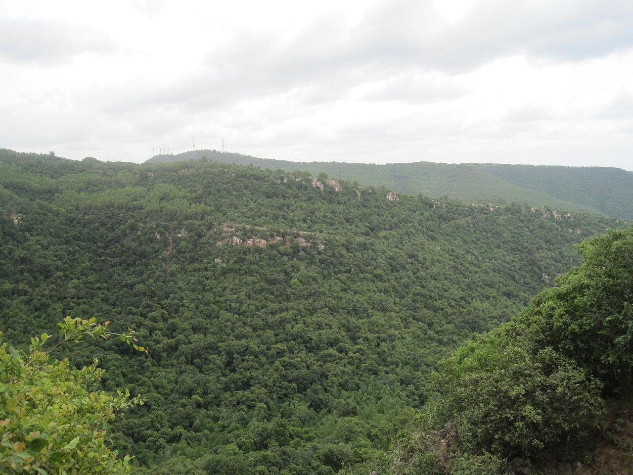 Sri Venkateswara National Park, Tirupati-Incredible Places to Visit in Tirupati