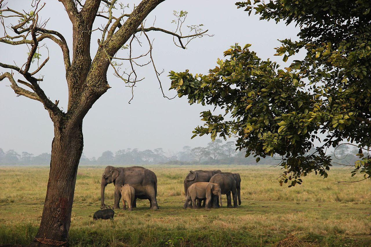 Kaziranga National Park - The Best Places to Visit Assam in Summer