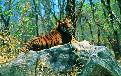 Surrounded by Wildlife Sanctuaries - Facts That You Wish You Knew About Wayanad
