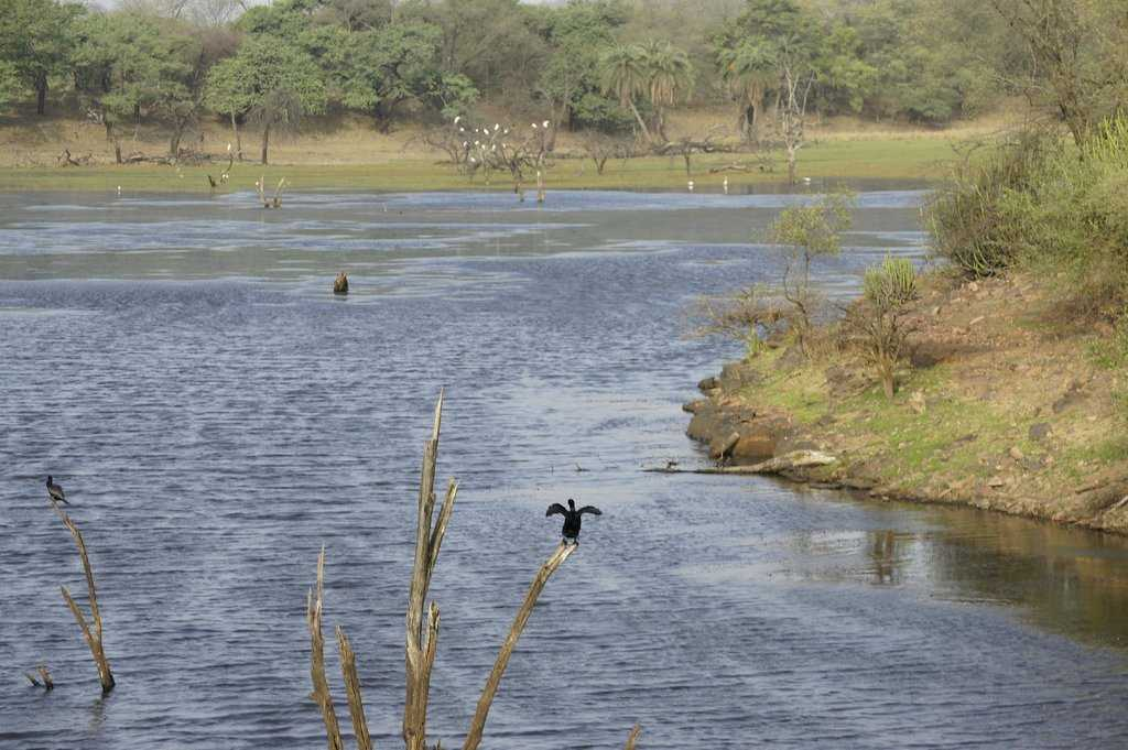 Top Place to Visit in Ranthambore-Surwal Lake