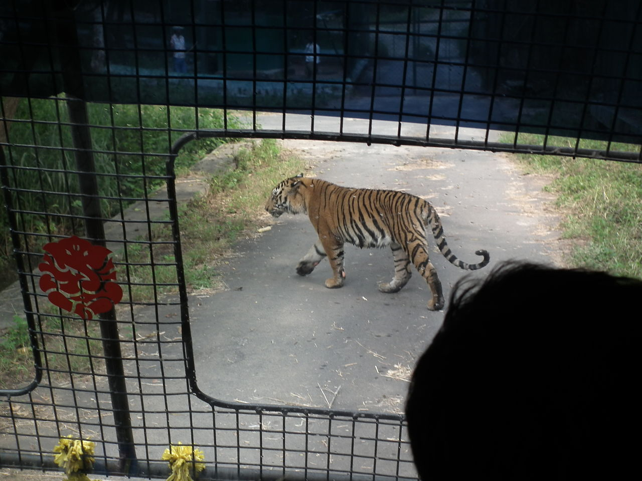 Activities To Do Within The Bannerghatta National Park-Take a Ride With The Grand Safari