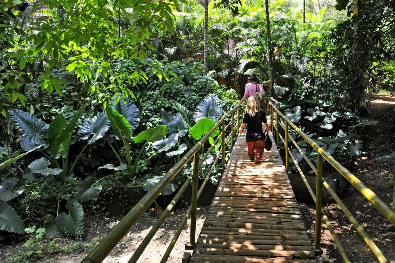 Take A Walk Through the Spice Plantations - Don't Leave Goa Without Experiencing this Alternative Things