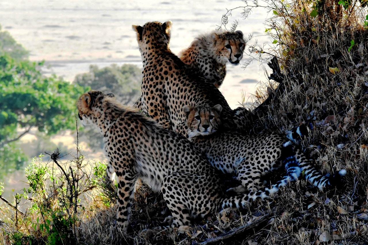 Top Wildlife Sanctuaries To Visit In Arunachal Pradesh-Talley Valley Wildlife Sanctuary