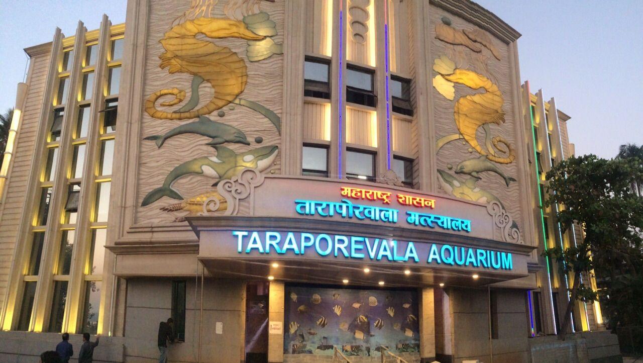Taraporewala Aquarium Most Visited Places in Mumbai