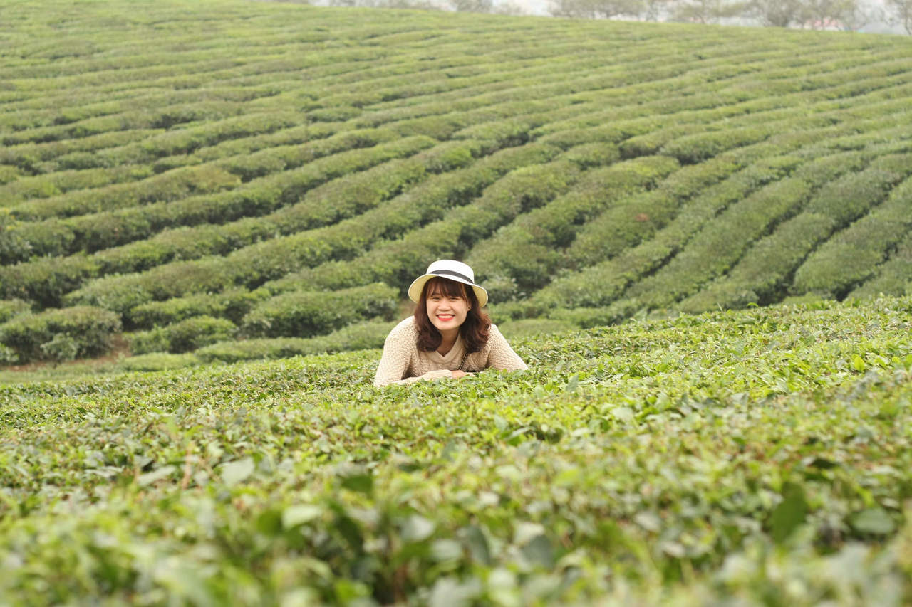 Winter Season in Assam & The Best Places to Visit Assam in Summer-Tea Festival