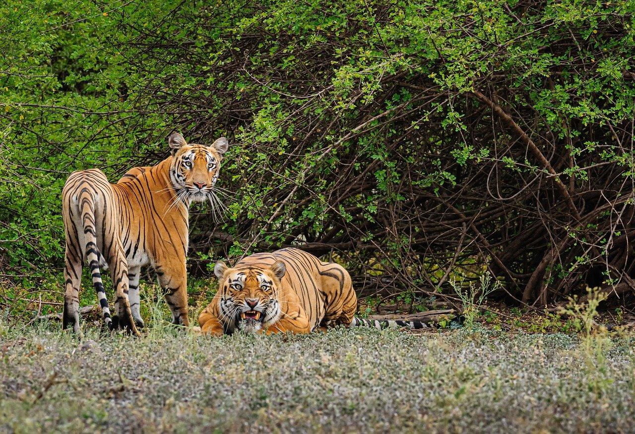 The Major Attractions of Bhimbandh Wildlife Sanctuary