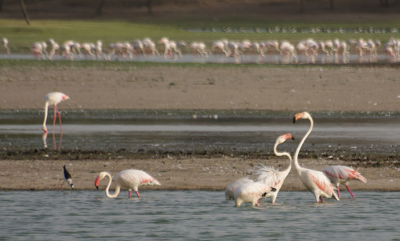 Amazing Place To Visit in Mehsana-Thol Lake Bird Sanctuary