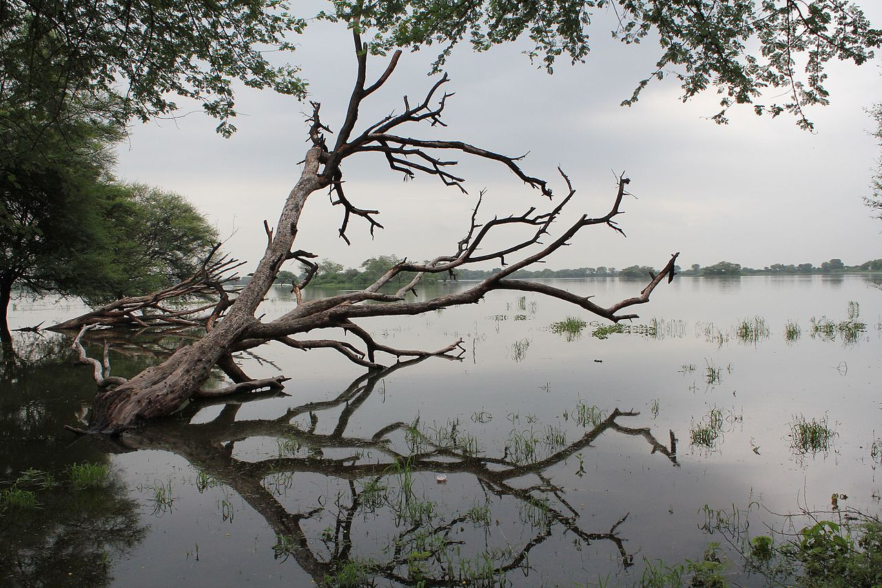 Best Place To Visit in Mehsana-Thol Lake