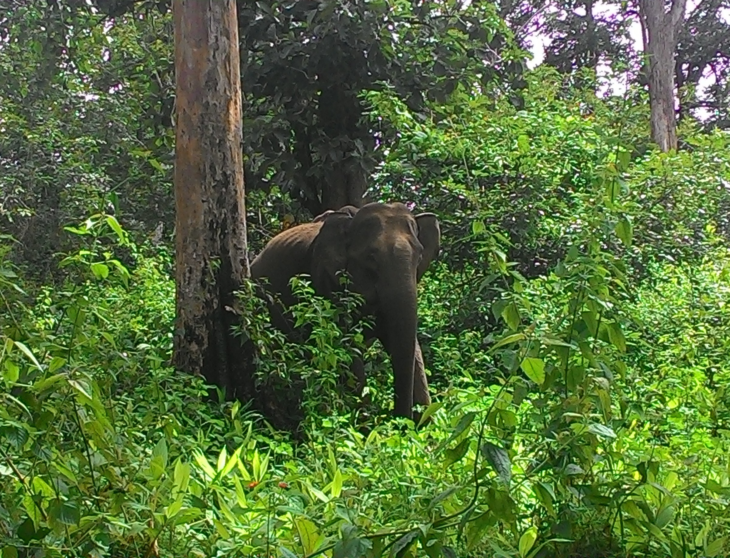 Tholpetty Wildlife Sanctuary Must-Visit Places During Wayanad Trip