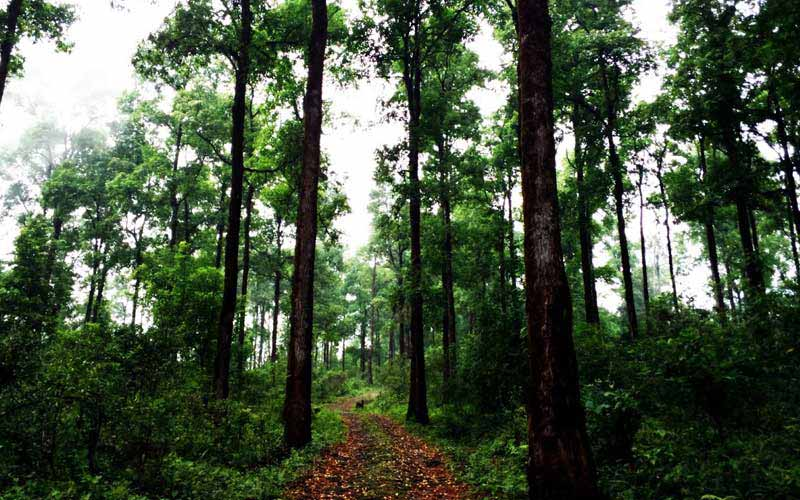 Best Place To See Near Neora the Wildlife Reserve-Todey Tangta