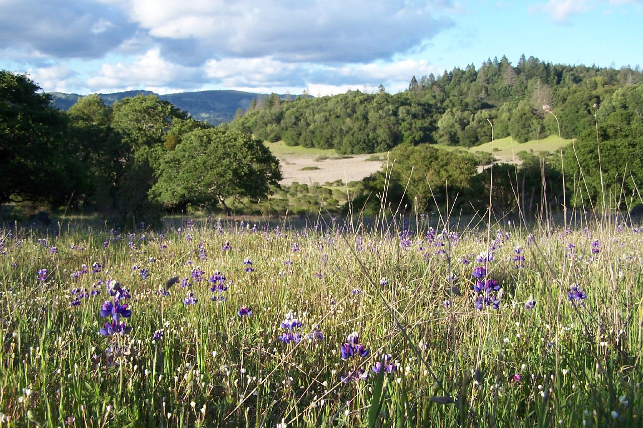 10 Top-rated Tourist Places to visit in Santa Rosa
