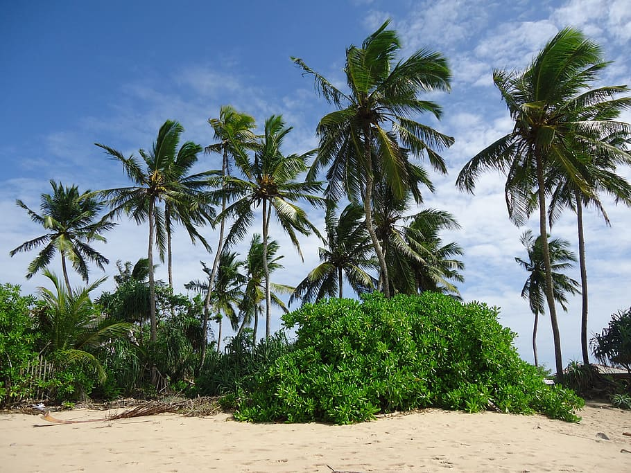 Tropical Climate-Reason to Visit Sri Lanka Will Amaze You