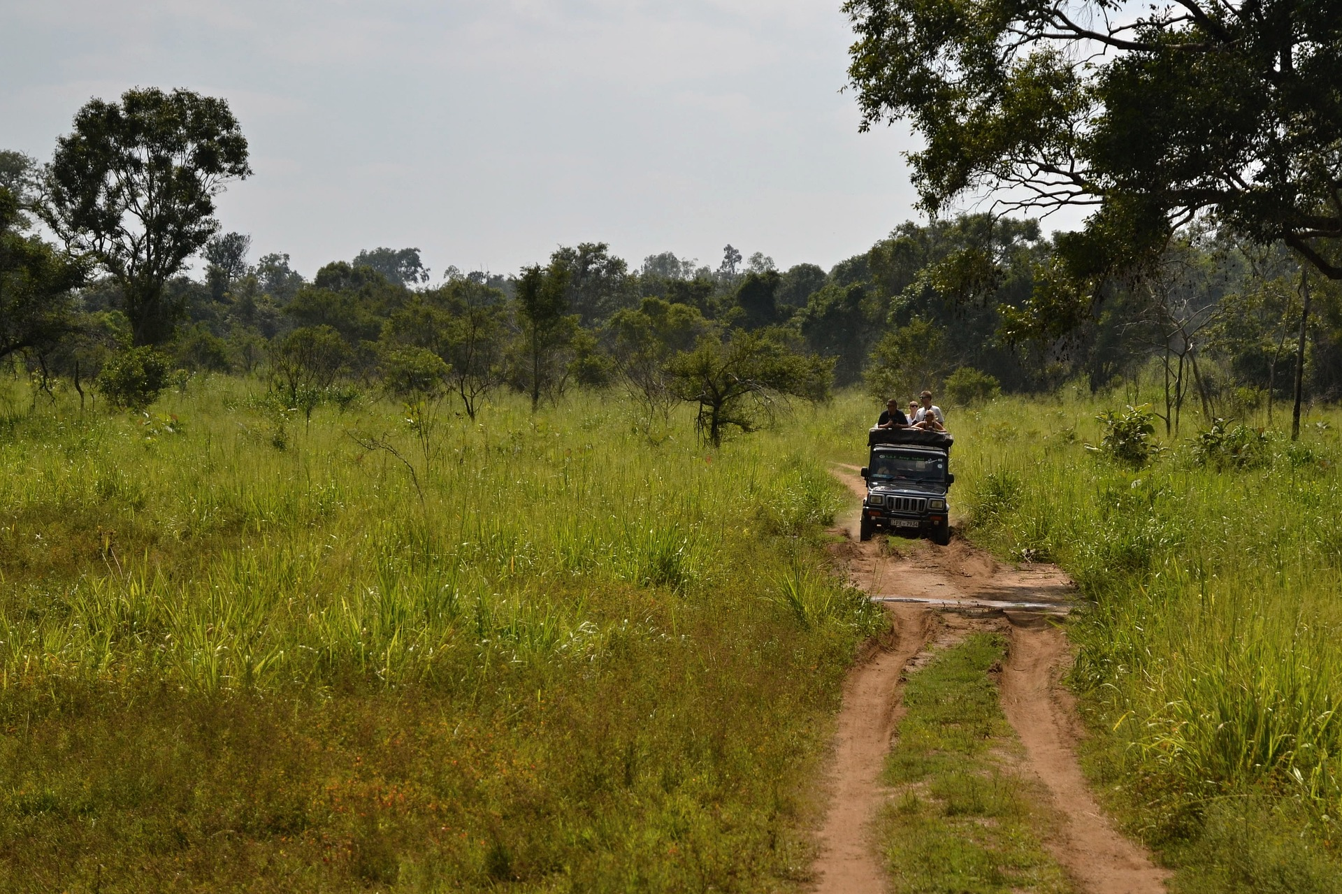 Types of Safaris Available at Pench and Their Timings