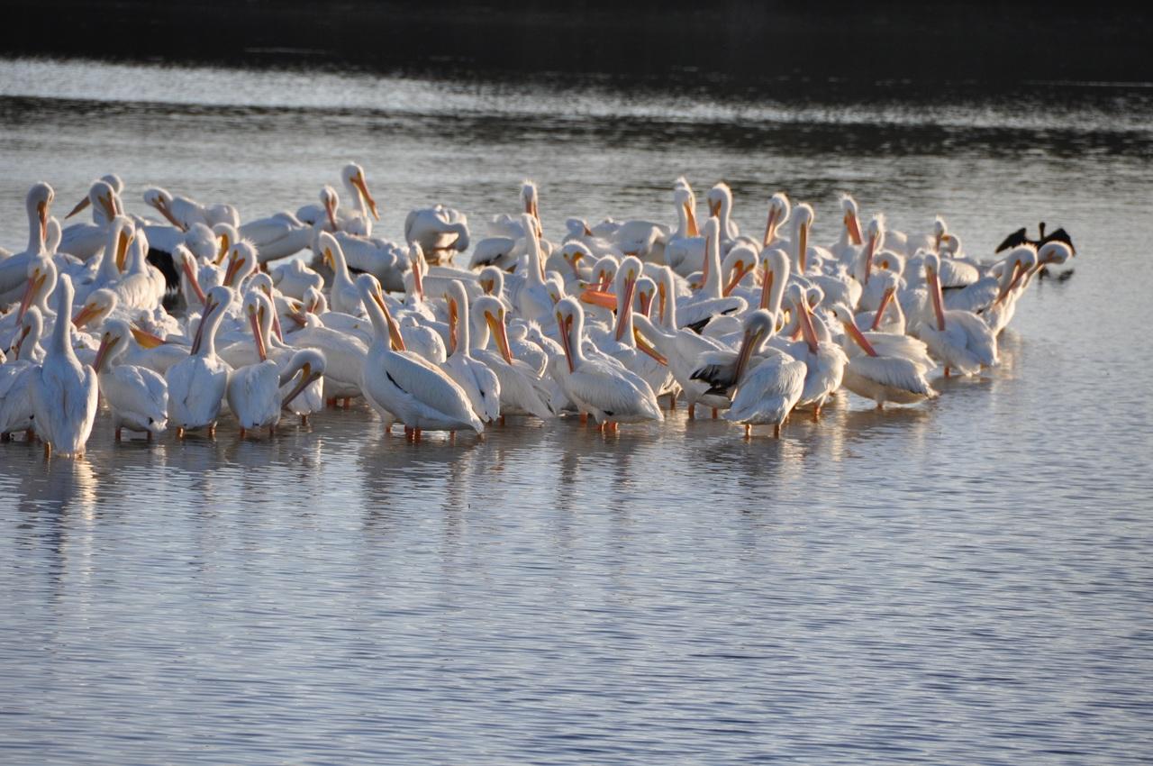 Place to Visit In Sahibganj, Jharkhand-Udhwa Lake Bird Sanctuary