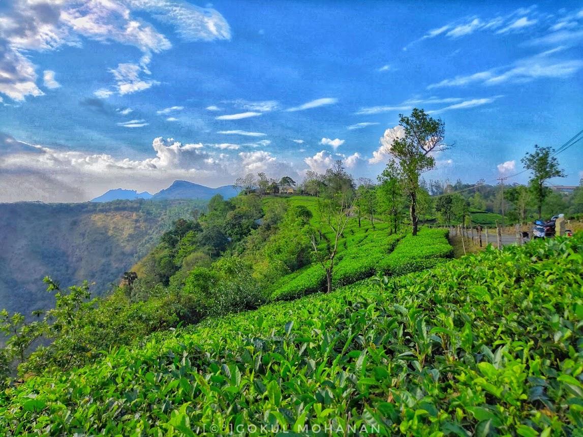 Exploring the Top 10 Attractions in Vagamon, Kerala