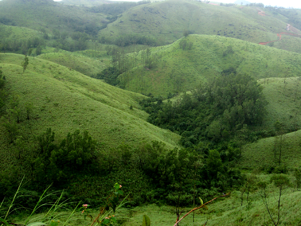 Top Hill Station in Kerala-Vagamon