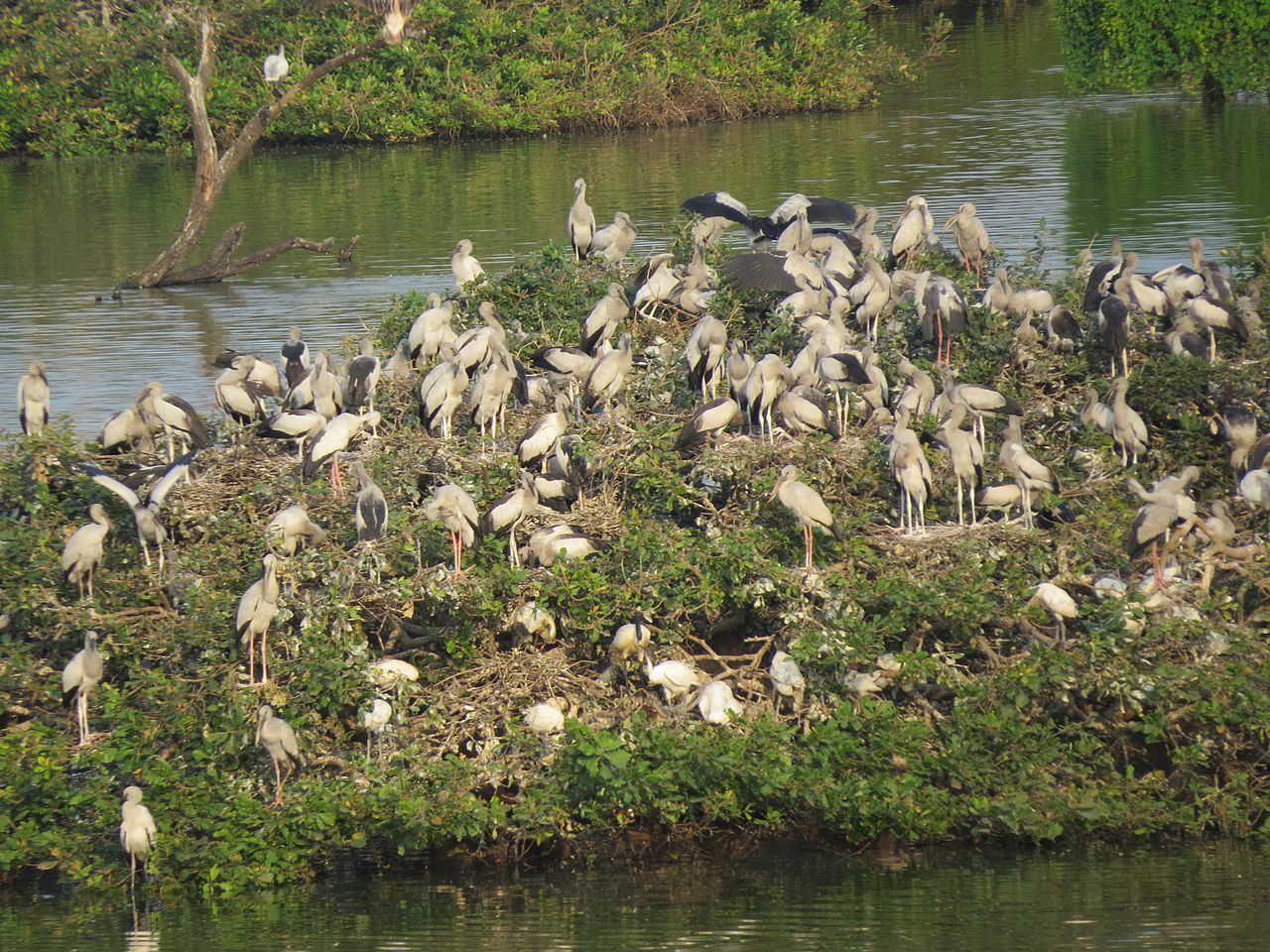 Amazing Weekend Destination From Chennai-Vedanthangal Bird Sanctuary