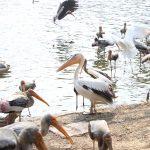 Visit Porbandar Bird Sanctuary in Gujarat