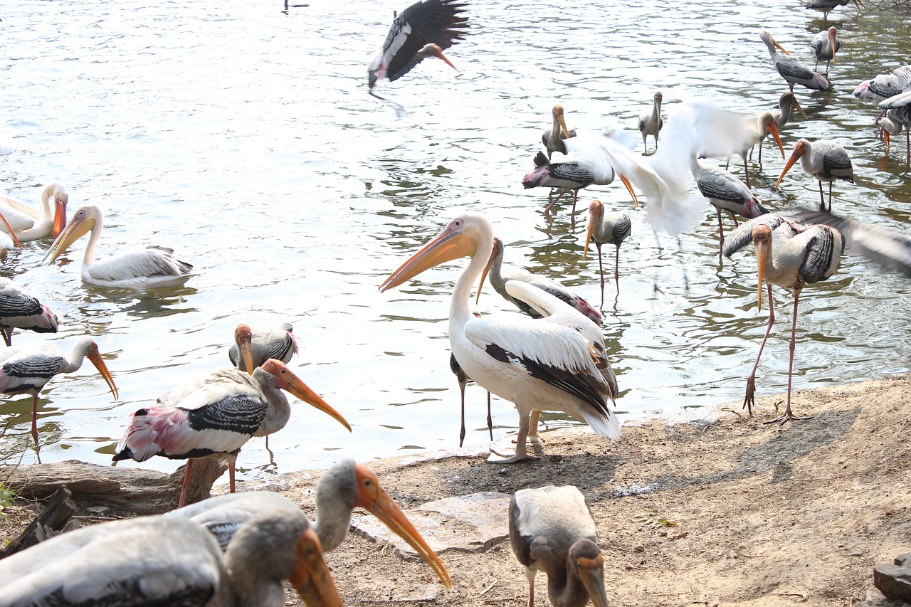 Visit Porbandar Bird Sanctuary in Gujarat
