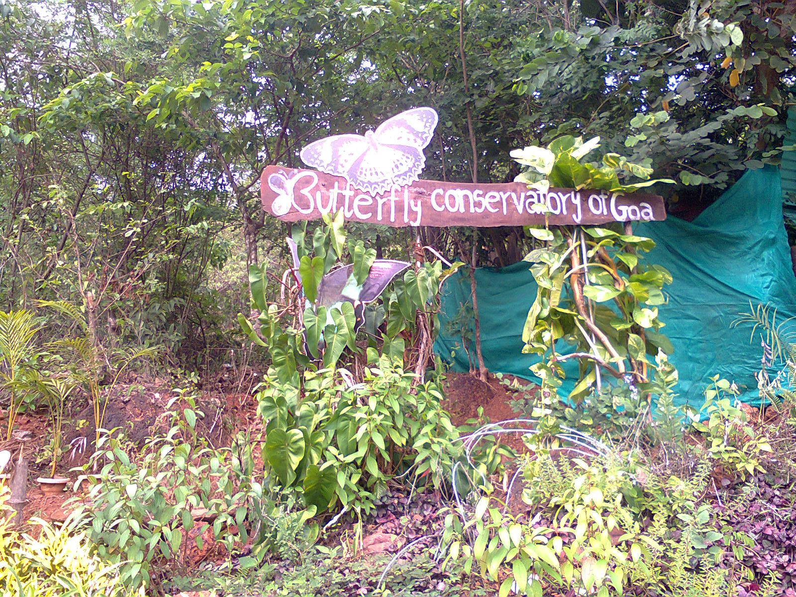 Visit the Butterfly Conservatory - Don't Leave Goa Without Experiencing this Alternative Things