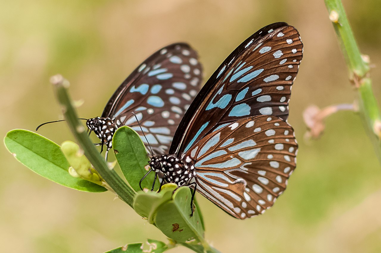 Visit the Butterfly Park Within The Bannerghatta National Park