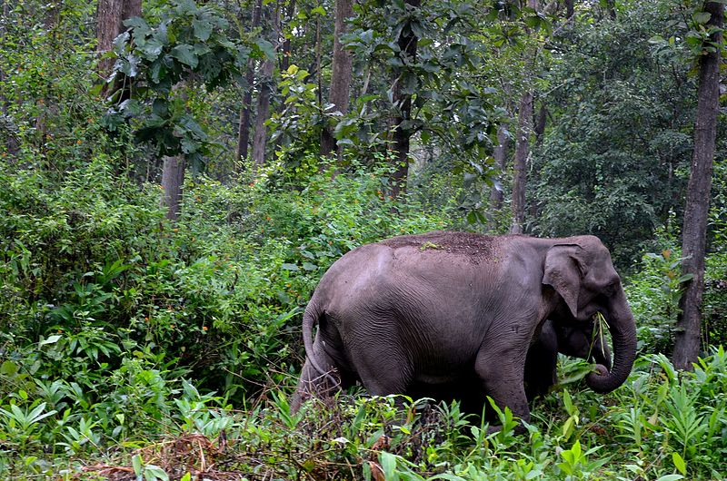 Visit The Wayanad Wildlife Sanctuary - Things Which One Must Not Miss in Wayanad
