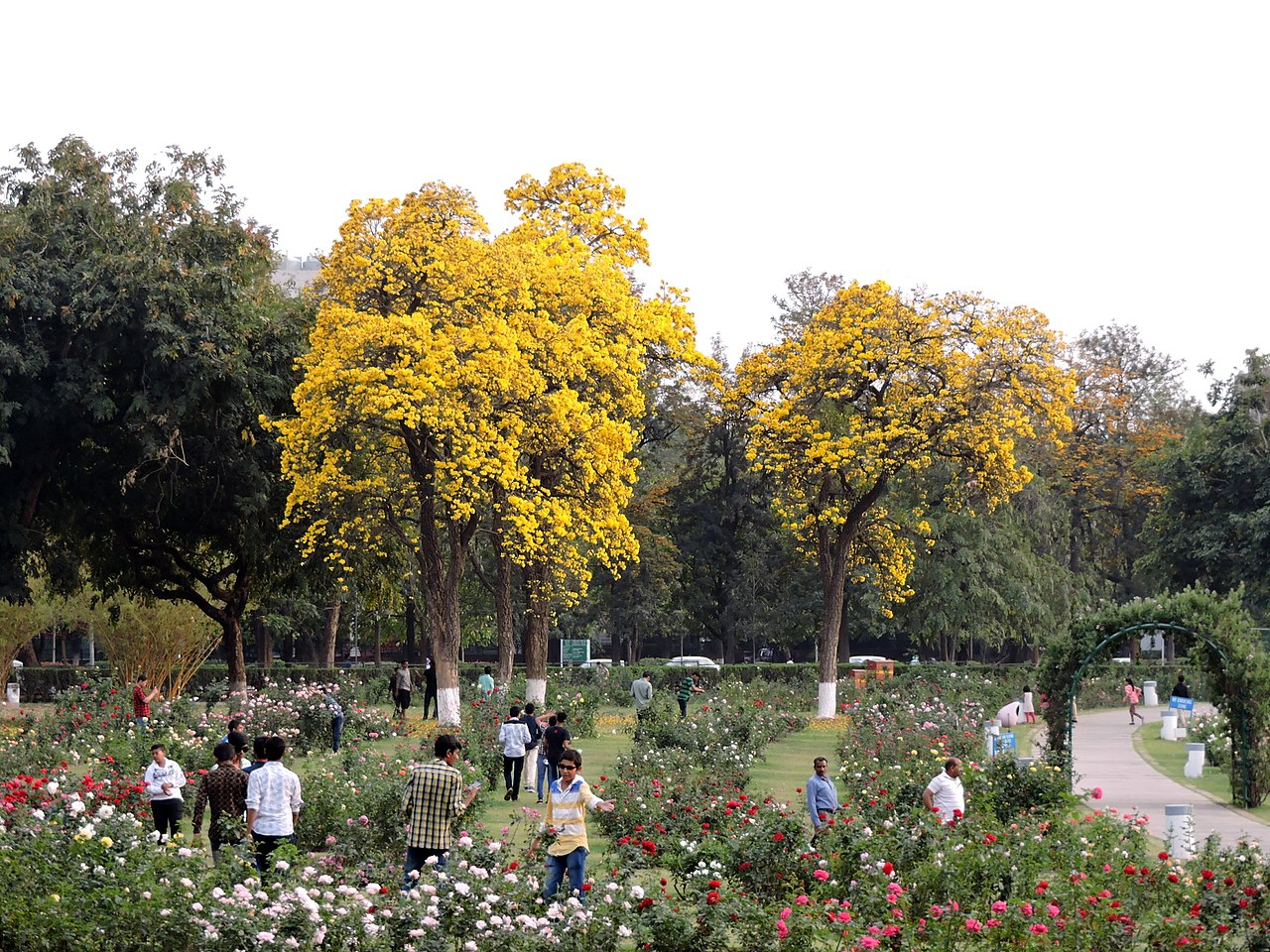 Visiting Asia's Most Extensive Garden Of Roses - -Top Must-Visit Place in Mohali