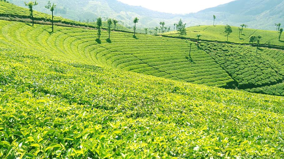 Wayanad Place Profile – Economy