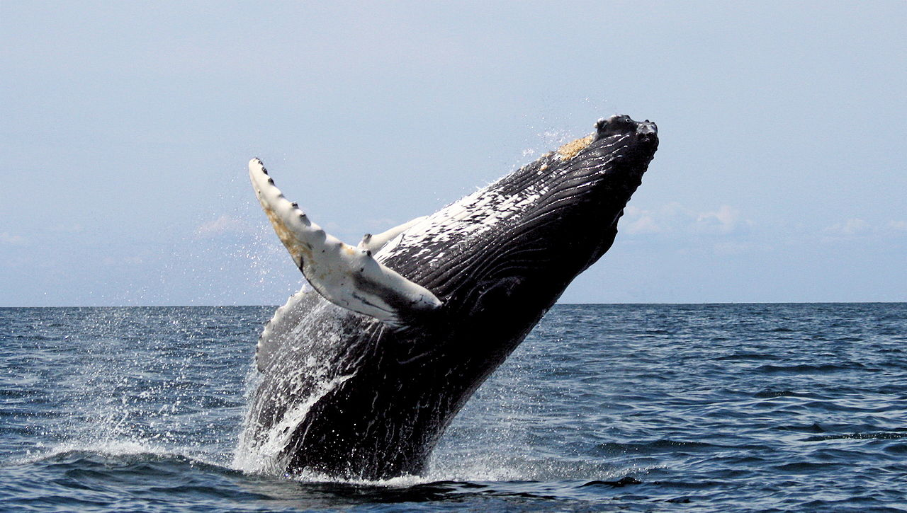 Nice Place to Visit In Massachusetts-Whale Watch at Stellwagen