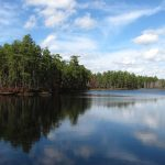 Top 5 Recommended State Forests to Visit in New Jersey