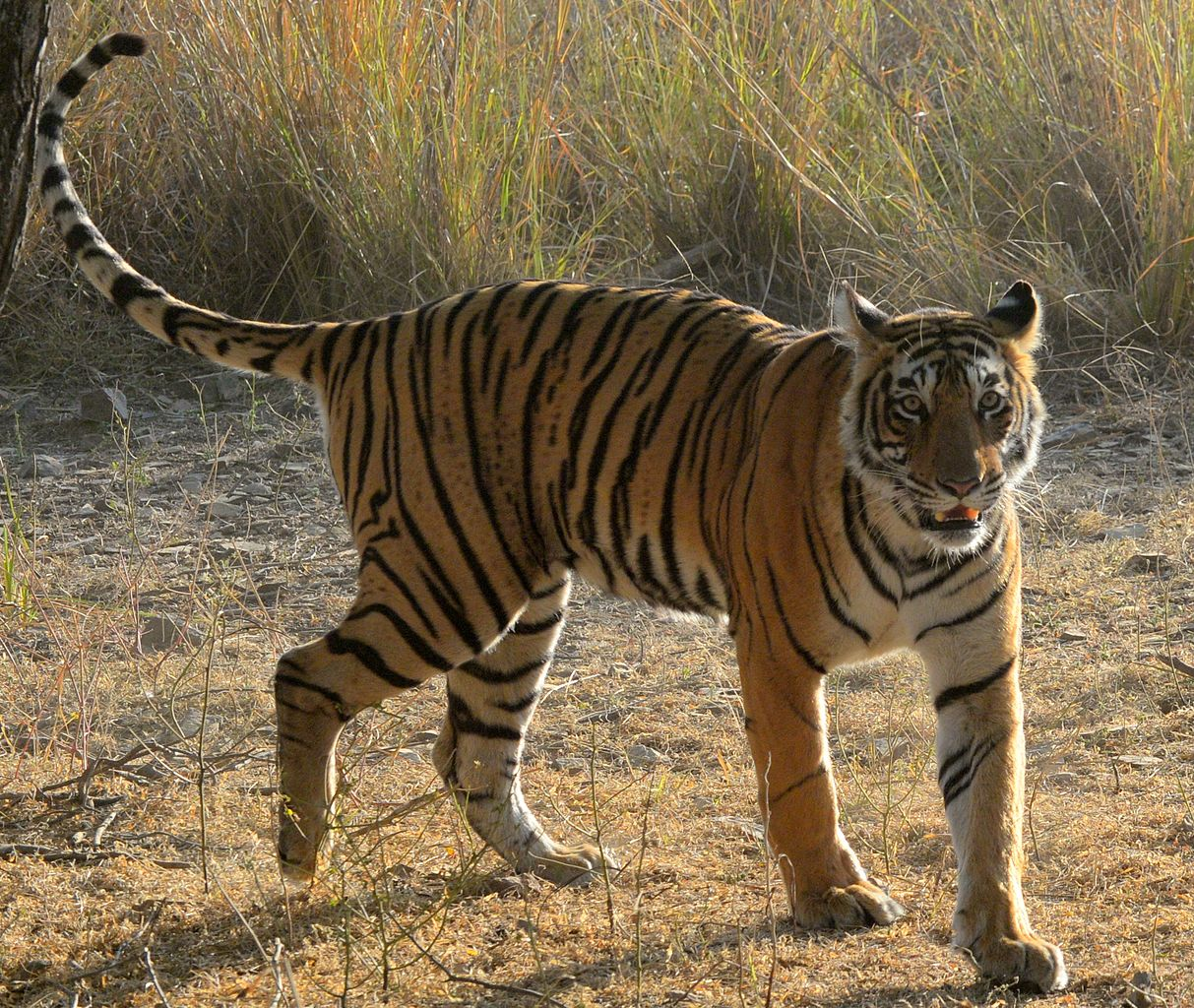 The Best Time To Visit Ranthambore, Rajasthan