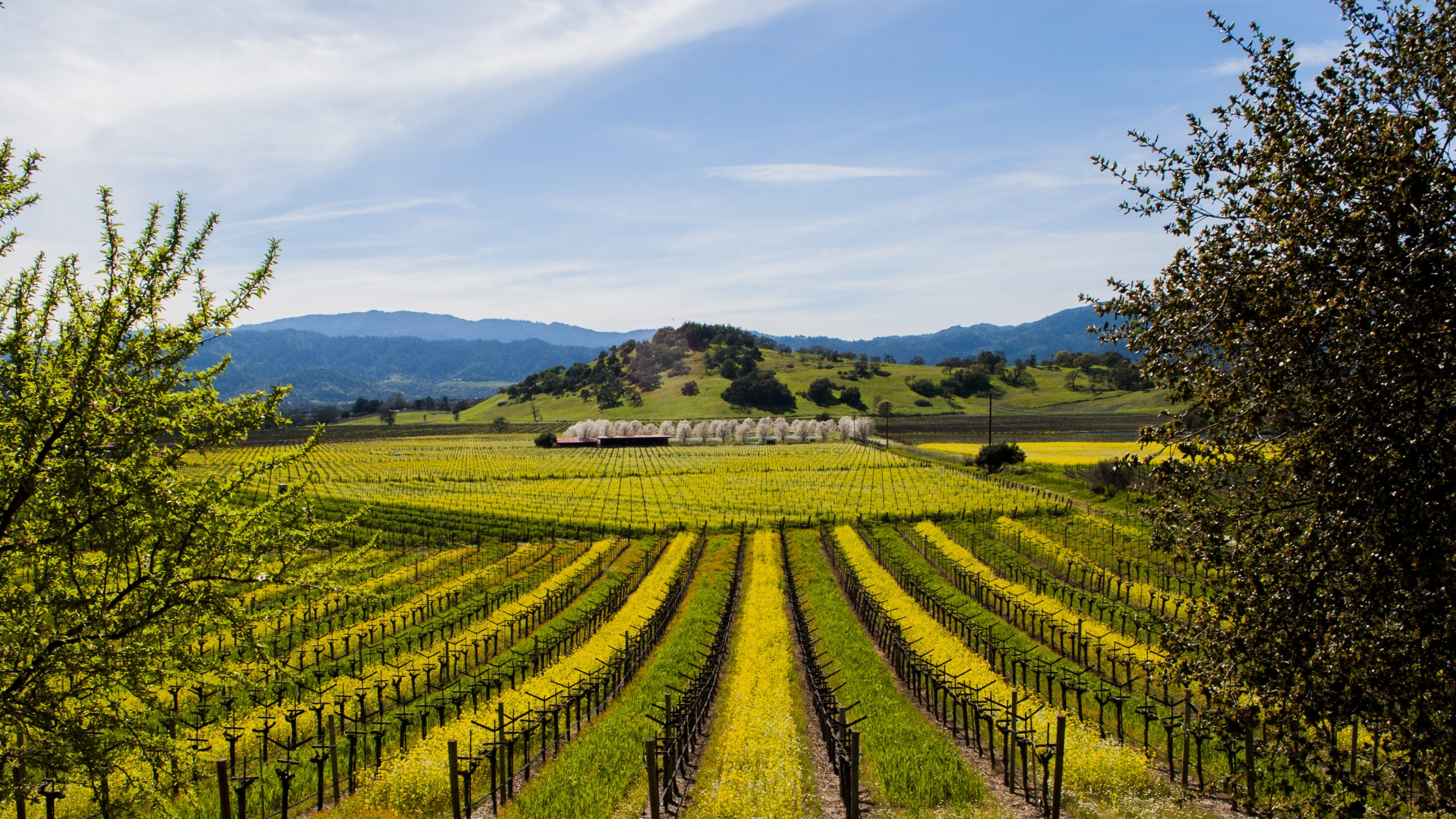When to Visit Napa Valley? - Napa Valley Tour Guide