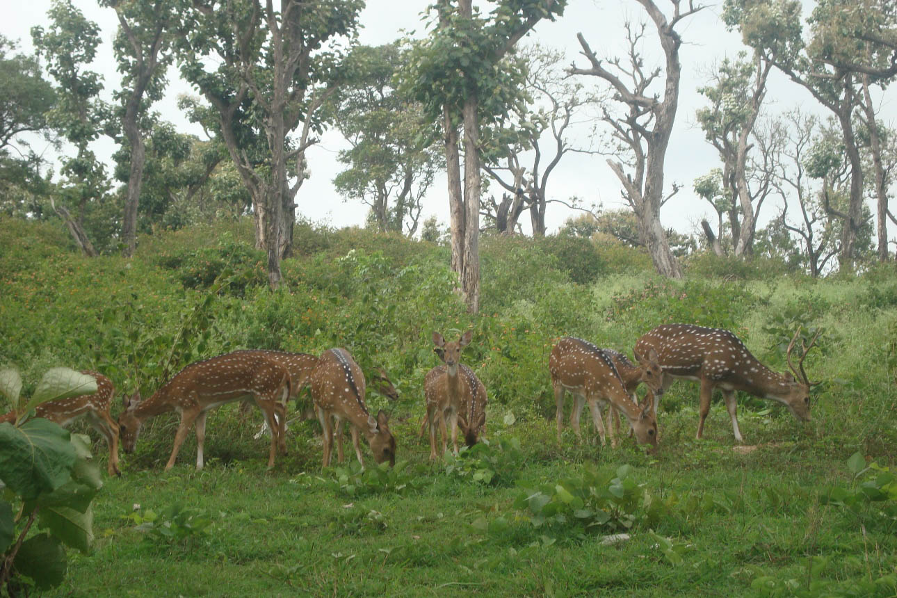 Where is Mudumalai Tiger Reserve Situated?