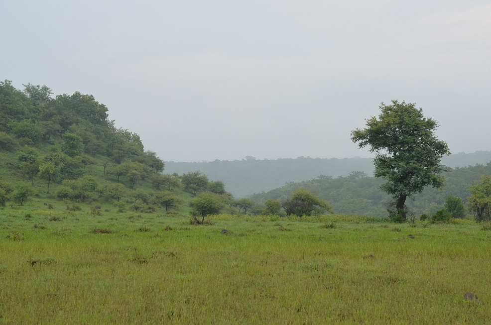 Why Should You Visit The Ananthagiri Hills In Telangana?