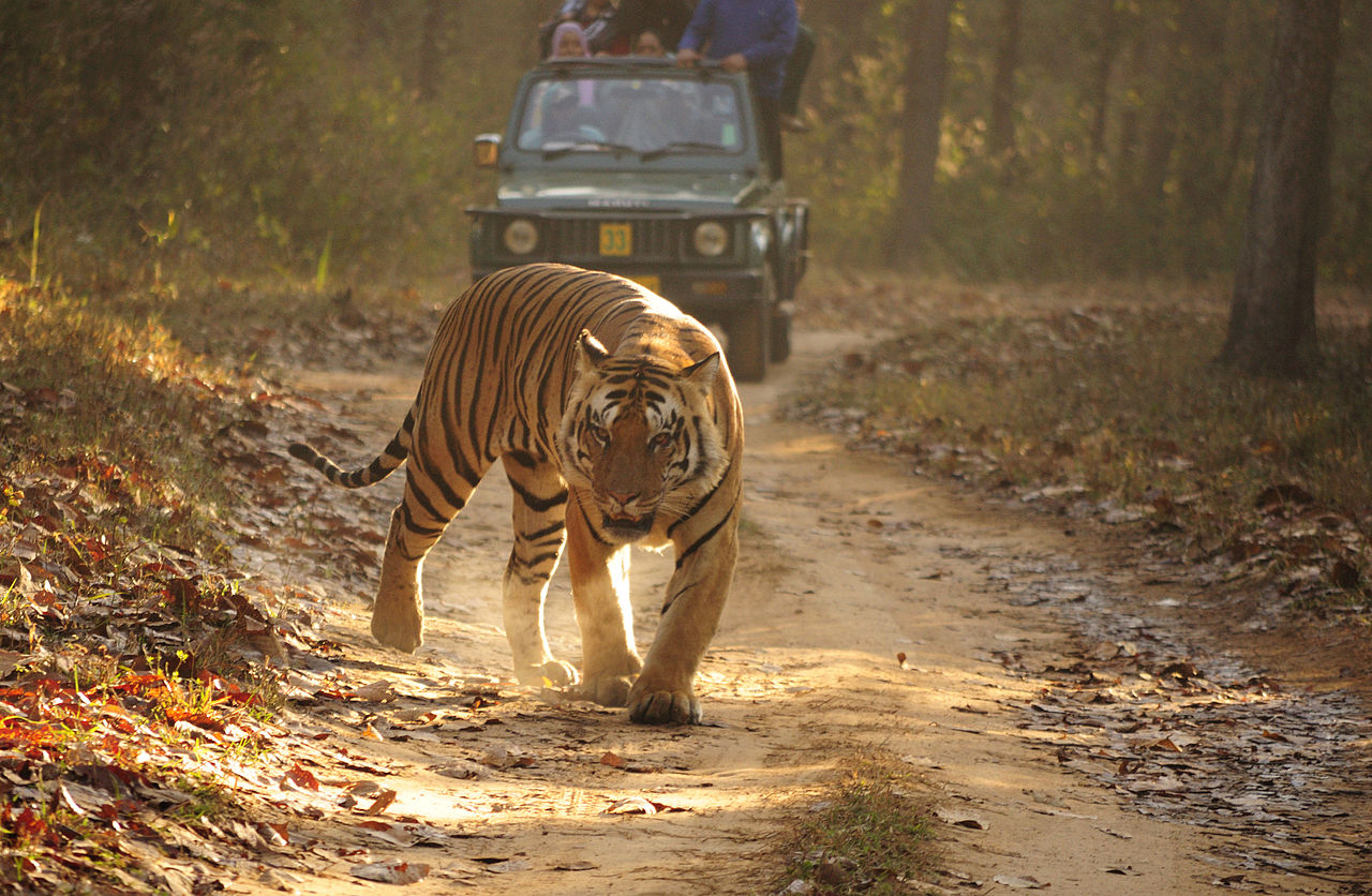Best Activities That Tourist Must Experience In Rajasthan-Wildlife Safari