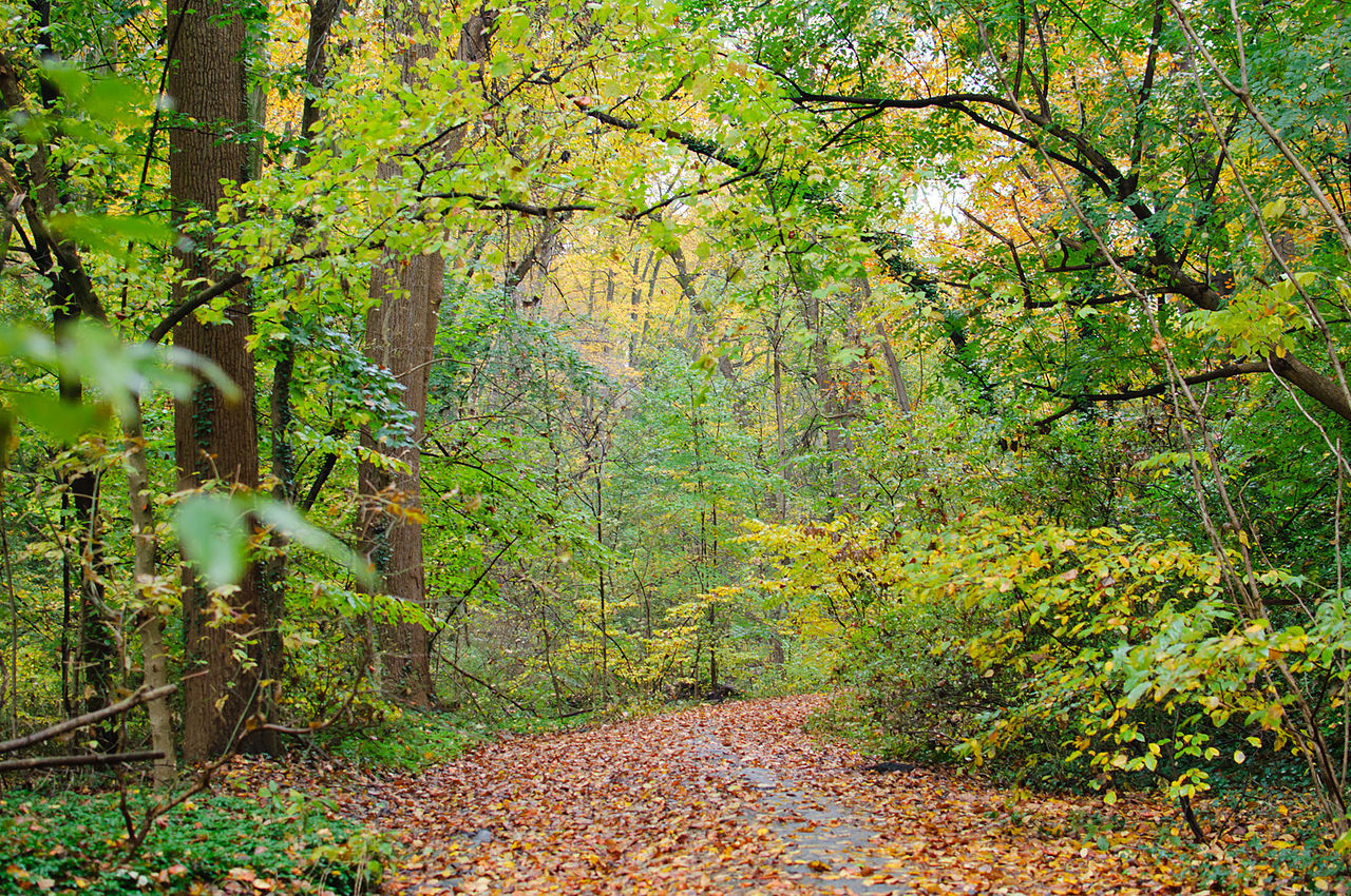 Wissahickon Valley Park - Most Popular State, National, and Regional Park in Philadelphia