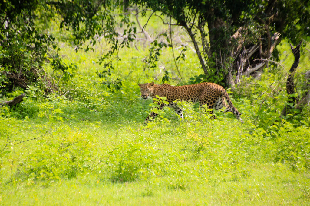 Top Place to Visit in Sri Lanka-Yala National Park