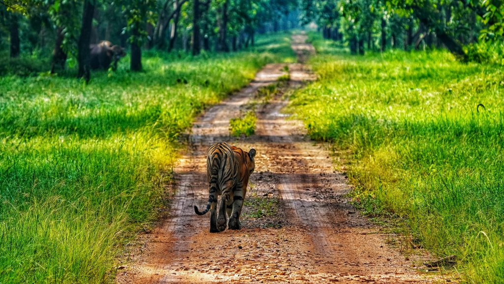 Amazing Weekend Destination from Amravati in Maharashtra-Kinwat Wildlife Reserve, Yavatmal