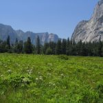 Yosemite National Park - Incredible Sight-Seeing Destination in California