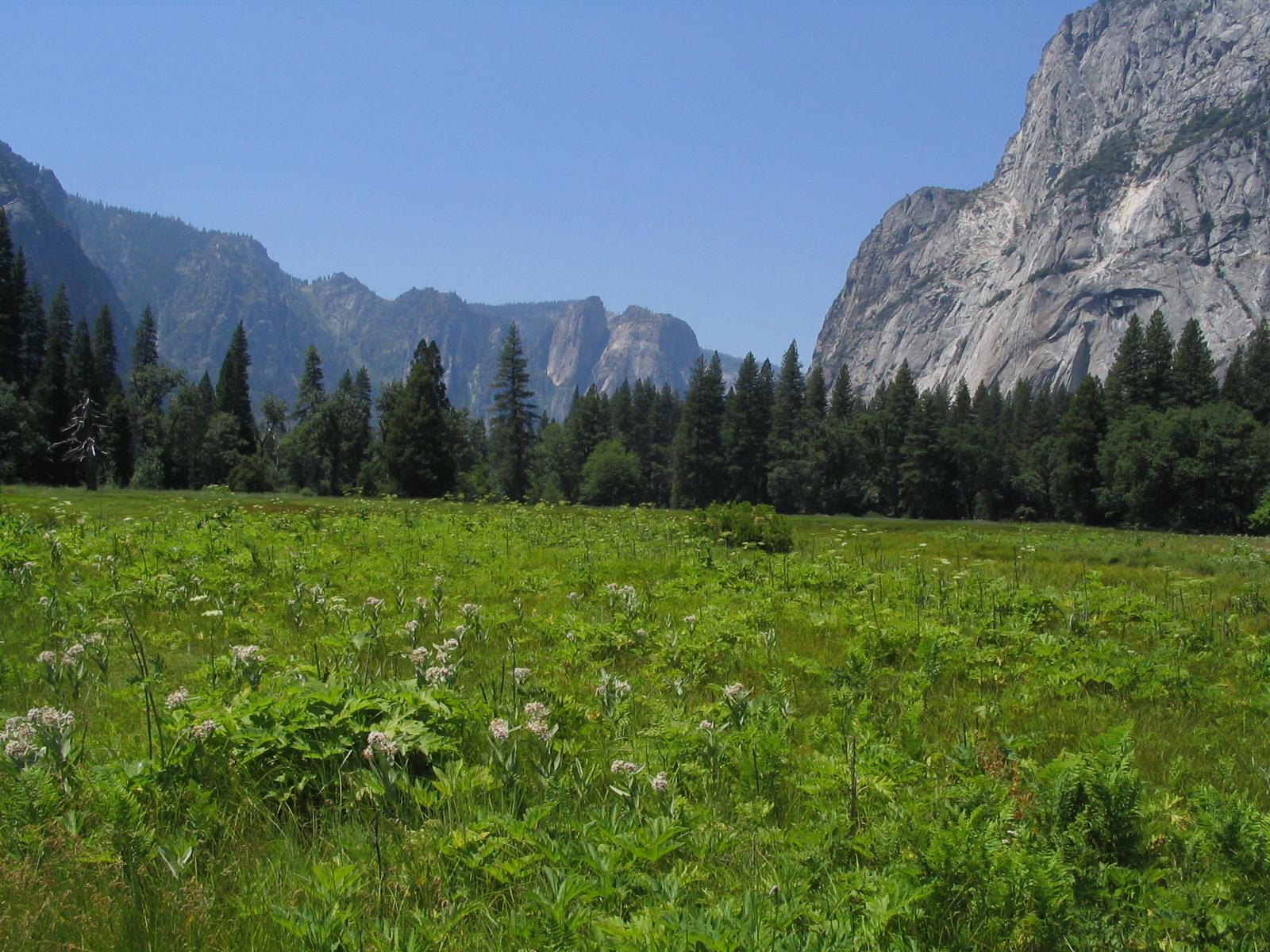 Yosemite National Park - Incredible Sight-Seeing Destination in California