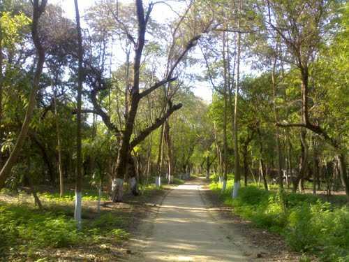 Sightseeing Destination in Bathinda-Zoological Garden